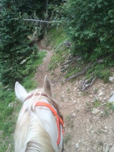 trail wMax